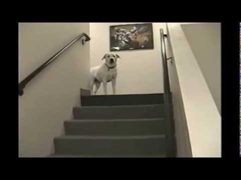 Perrito simpático bajando escaleras