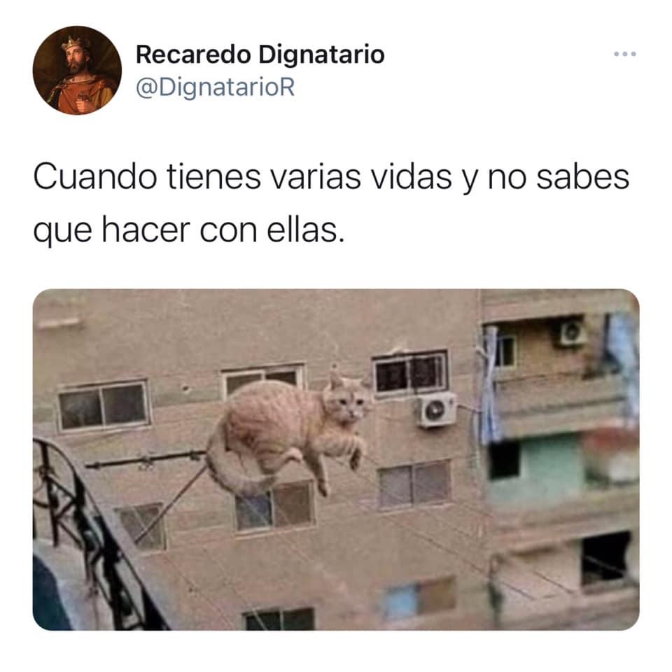 Los gatos tienen demasiadas vidas y ellos lo saben