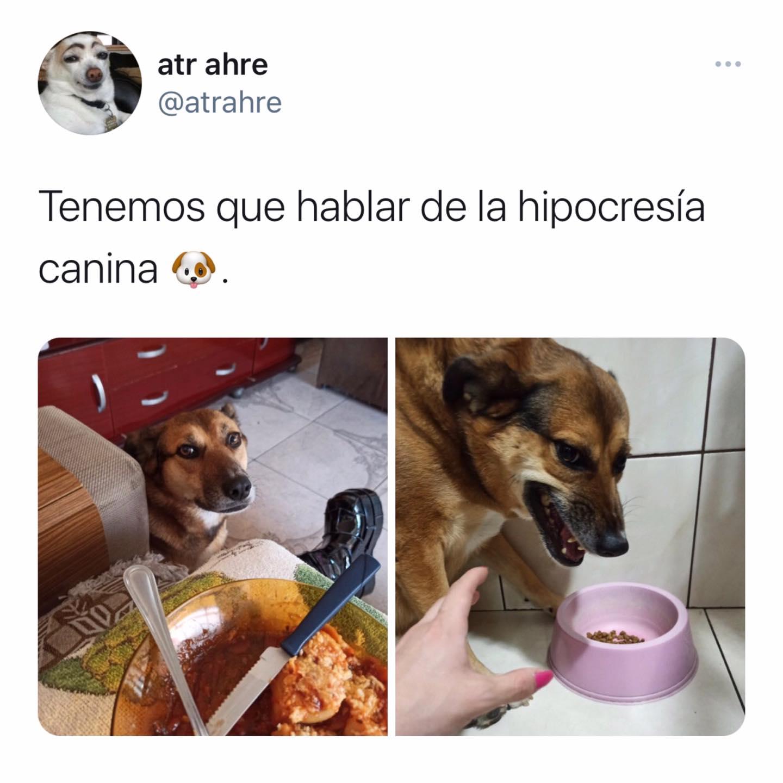 No te fíes nunca de un perro con comida