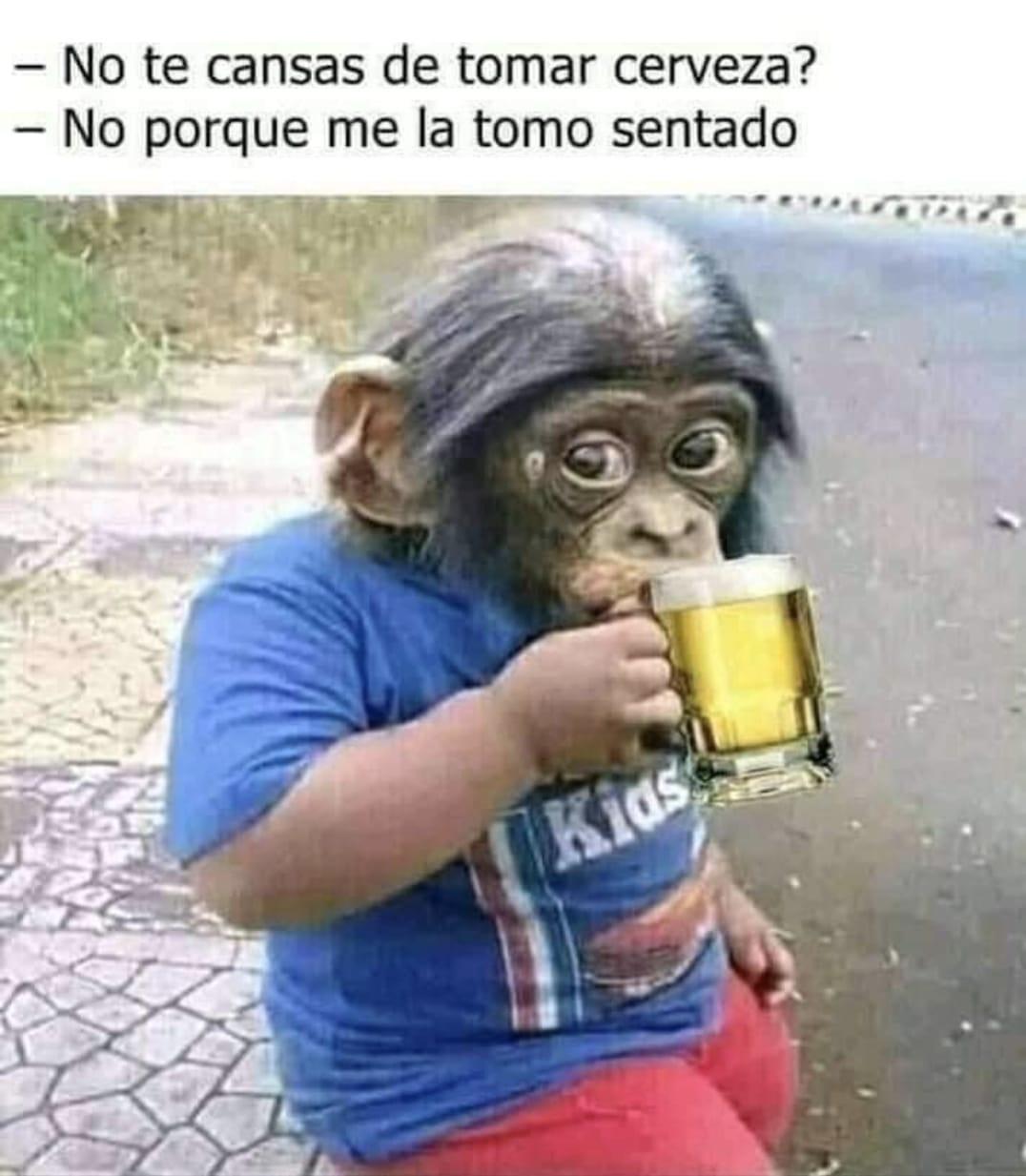 El mono no se cansa de beber cerveza